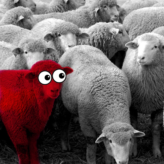 What Went Wrong With Having Unorthodox Opinions? An image of a herd of white sheep with one solitary red sheep questioning their actions. By whatwentwrongwith.com