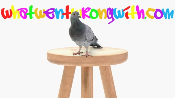 An image of a stool pigeon
